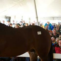 Cuba's Horse Industry Revived with Dutch Warmblood Sales